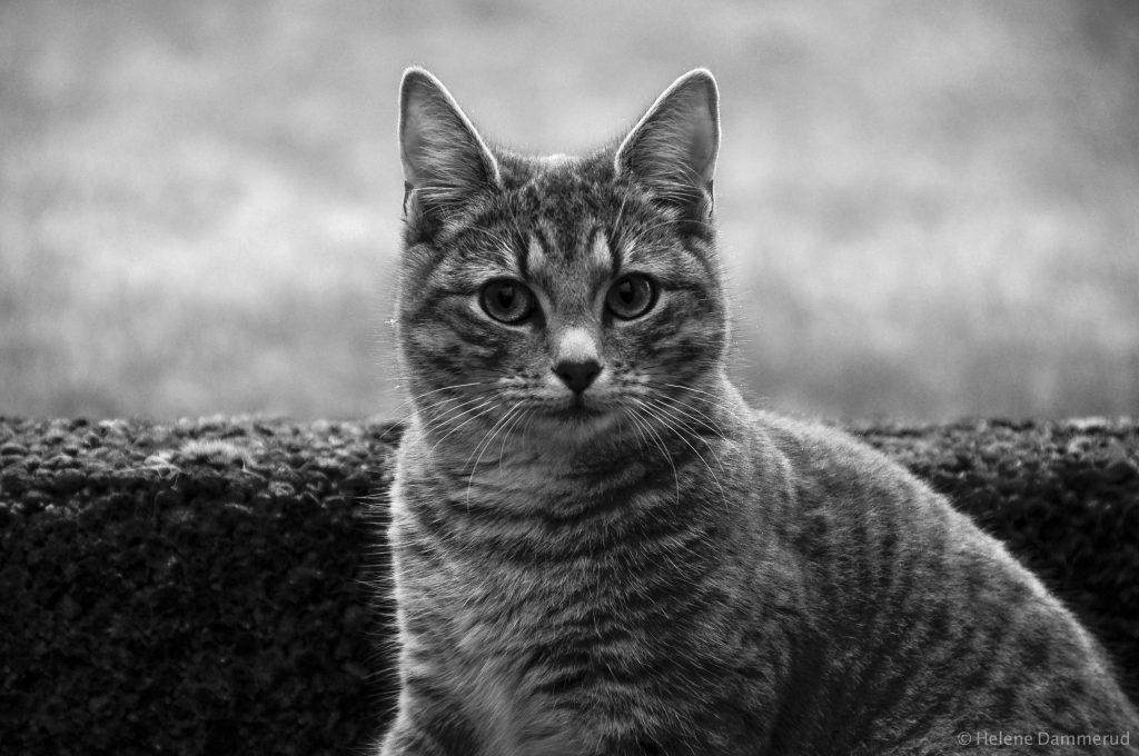 Katt-Helene